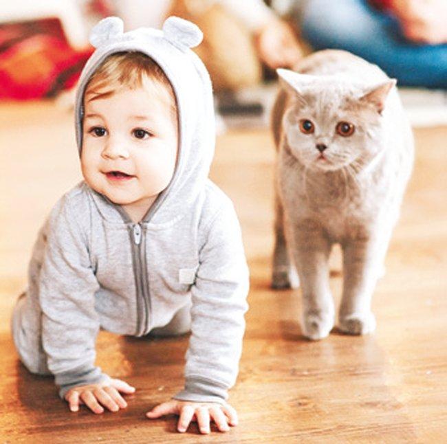 kedi-bebek