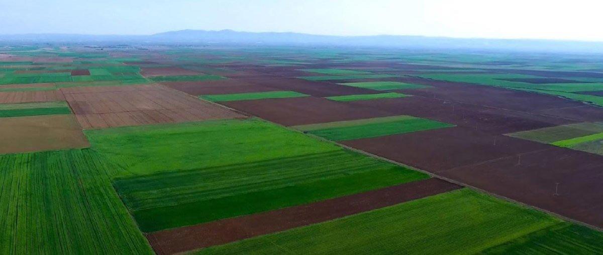 FOTO: SÖZCÜ / Termik santralin yapılması planlanan arazi