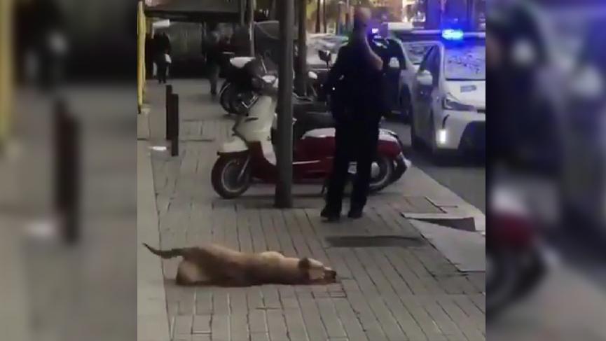 Olay yaratan görüntü: Polis evsiz genci darp etti, köpeğini vurdu