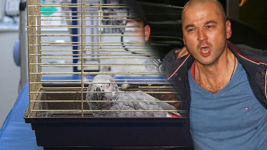 Murat Özdemir'in işkence ettiği papağan, yarın ameliyata alınacak