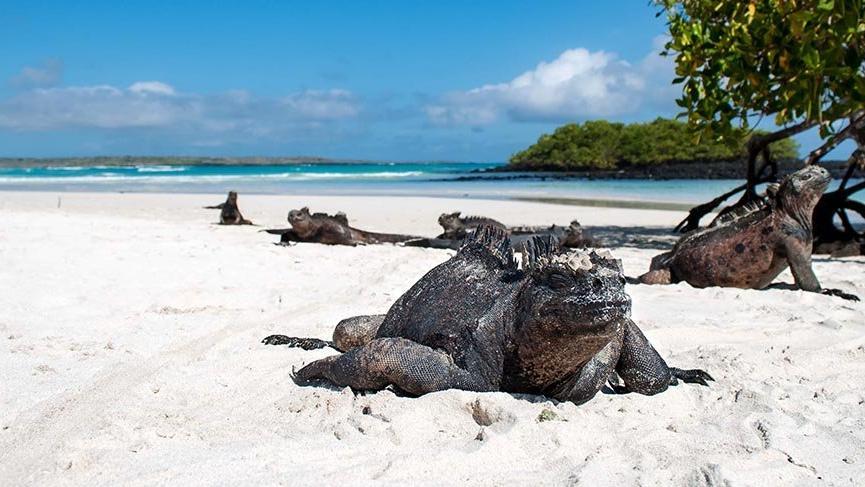 Bozulmamış bir dünya: Galapagos Adaları