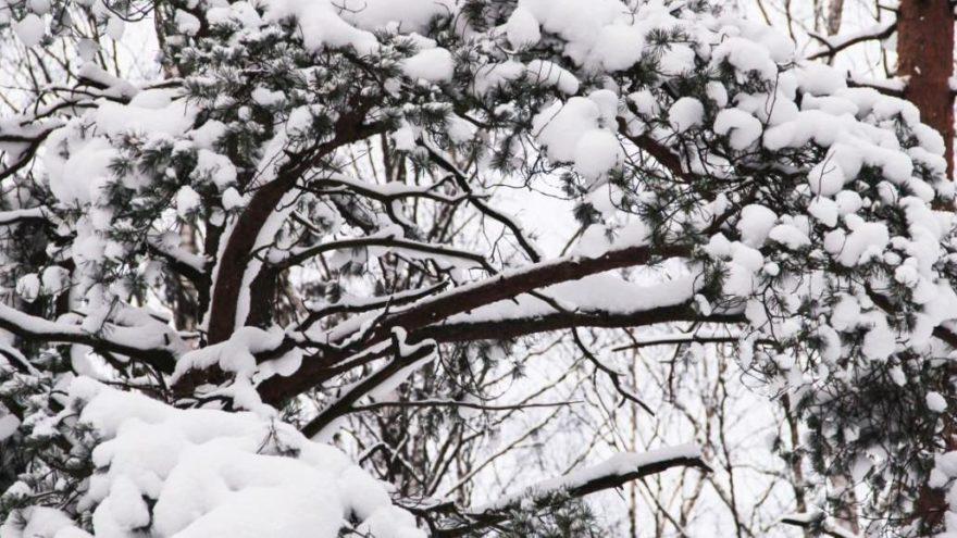 Ankara'da okullar tatil oldu! Vali'den kar tatili açıklaması!