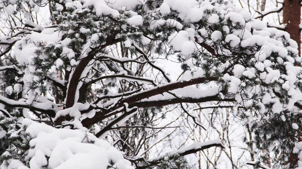 Son dakika: Meteoroloji'den Ankara'ya yoğun kar yağışı uyarısı!