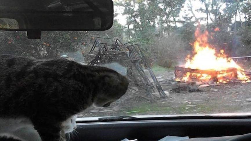 Bilirkişi raporuna kızdı Kedi Köyü'nü yaktı!