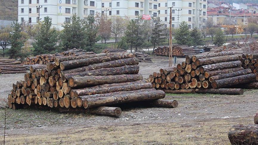 Orman işletme şefi ve muhafaza memuruna 'kaçak kesim' tutuklaması