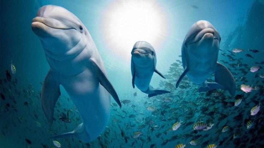 Hadi ipucu sorusu 3 Aralık: Marmara Denizi'nde görülen dünyanın en yaykın yunus balığı türü hangisi?