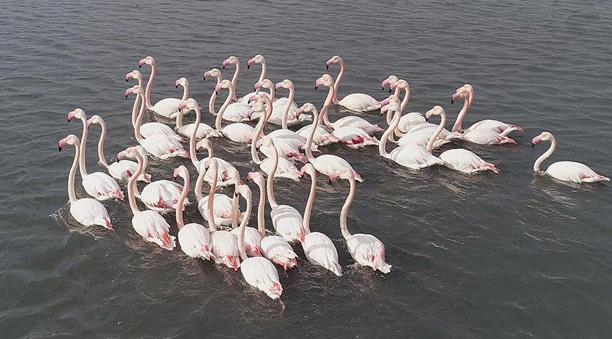 izmirde-flamingo-dha-1