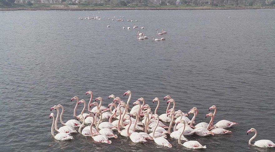 izmirde-flamingo-dha-2