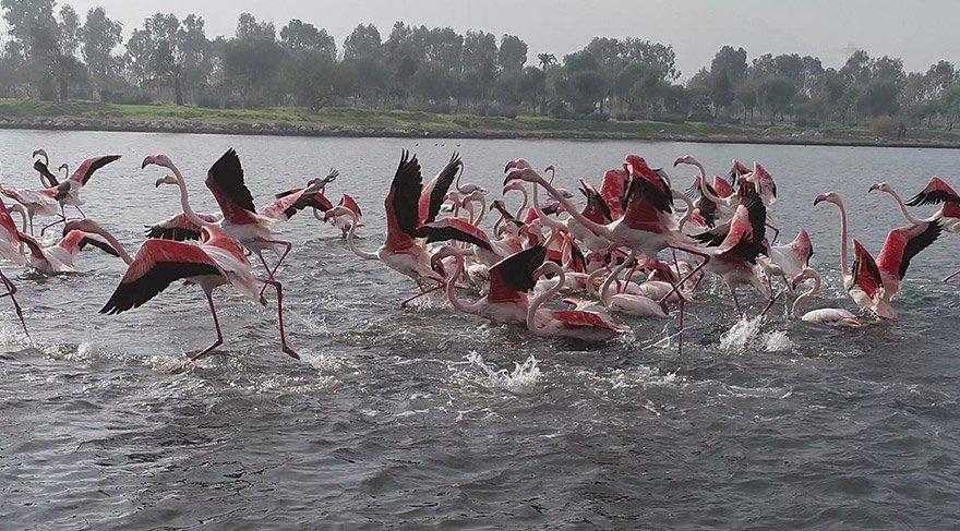 izmirde-flamingo-dha-3