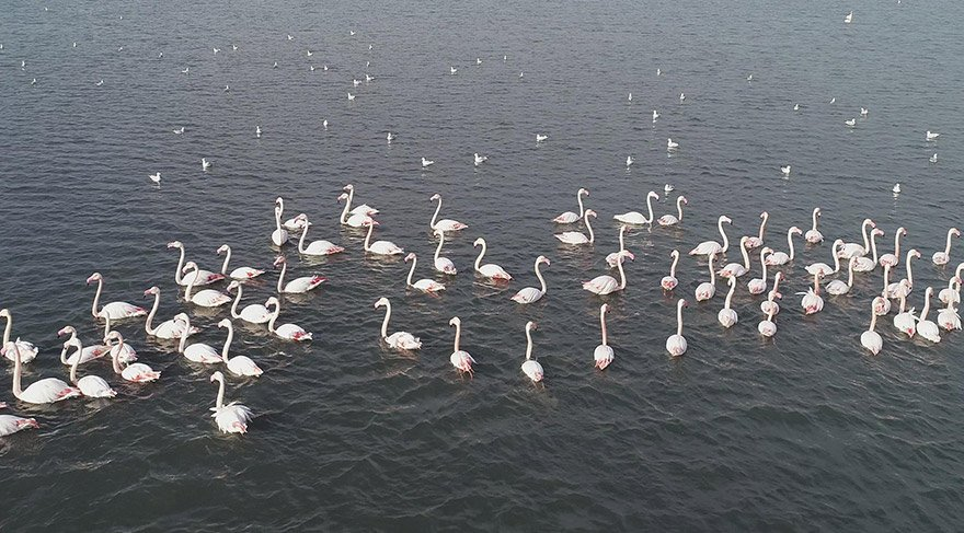 izmirde-flamingo-dha