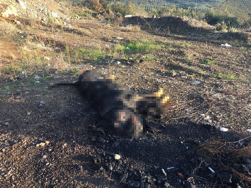 Caniler köpeği lastikle birlikte yaktı. DHA