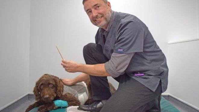 Köpek ameliyatın ardından sağlığına kavuştu.