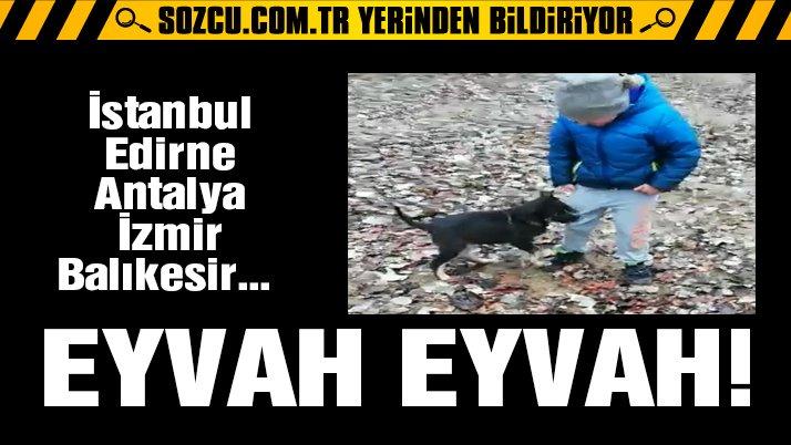 Türkiye'de birçok hastanede kuduz aşısı bulunamıyor!