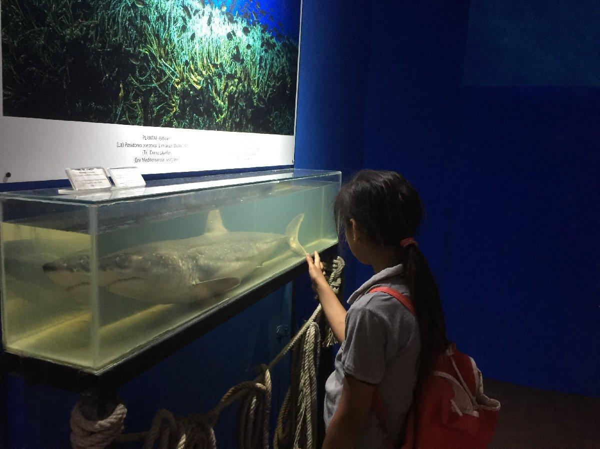antalya-deniz-muzesine-5-yilda-25-bin-ziyaretci-4