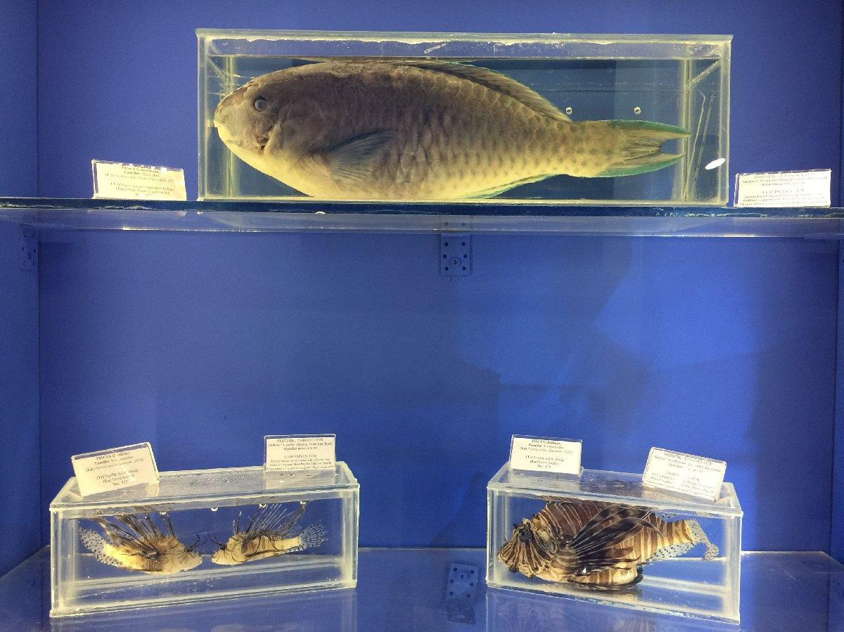 antalya-deniz-muzesine-5-yilda-25-bin-ziyaretci-5