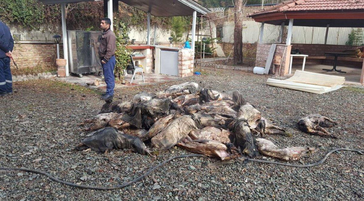 Kargo uçağının et ve benzeri ürünler taşıdığı ve kazayla birlikte kargonun zarar görerek etrafa saçıldığı açıklandı.