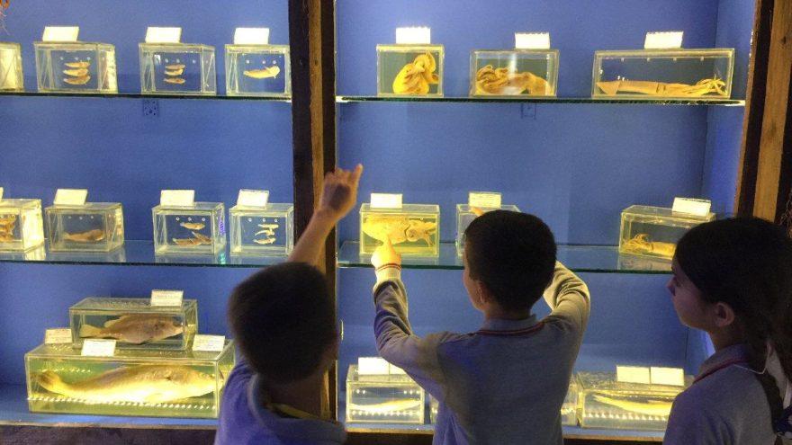 Antalya deniz müzesine 5 yılda 25 bin ziyaretçi