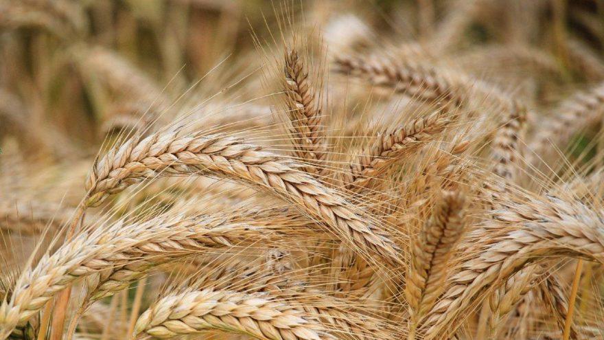 Tarım-ÜFE Aralık ayında yüzde 3,28 arttı