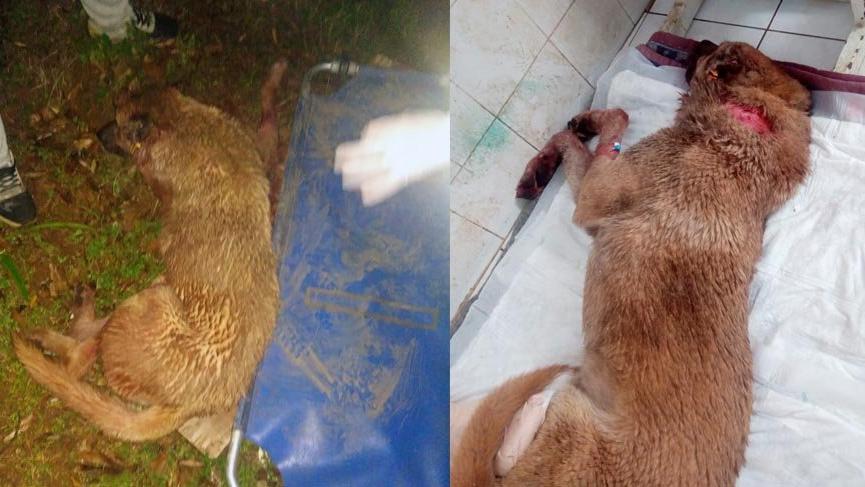 Köpeğe tecavüz etti, arka bacaklarını kırdı!