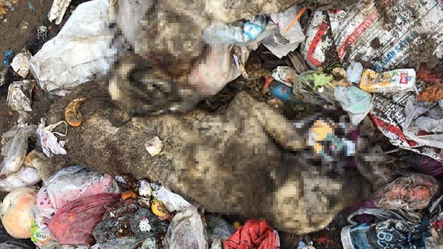 Isparta'da, çöplükte 12 köpek ölüsü bulundu