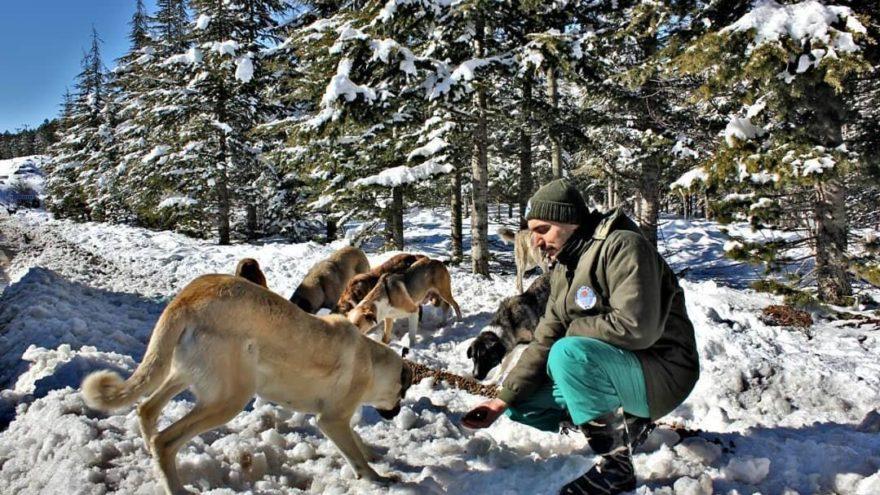 Mersin'de hayvanlar için seferberlik