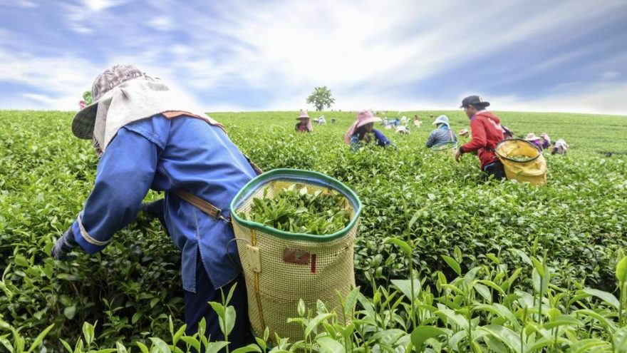 Mevsimlik bir işte çalışan işçinin yıllık izin hakkı var mıdır?