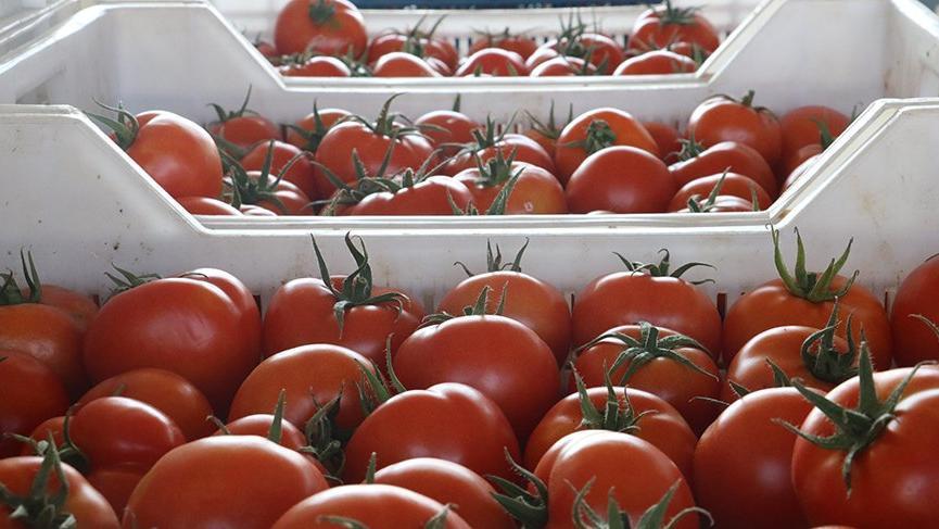 Rusya domates ve portakalı geri gönderdi