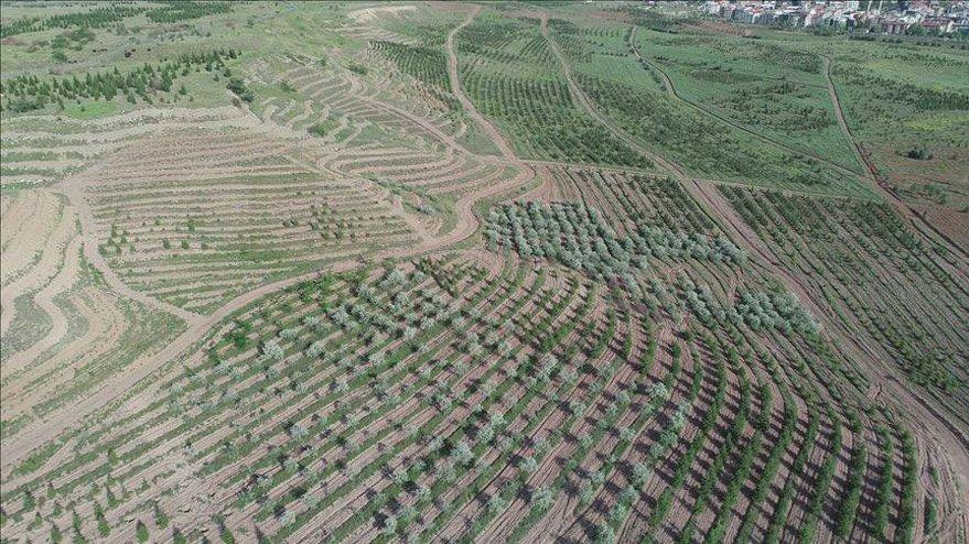 Atatürk Orman Çiftliği arazisinden 1 milyon metrekare daha imara açıldı