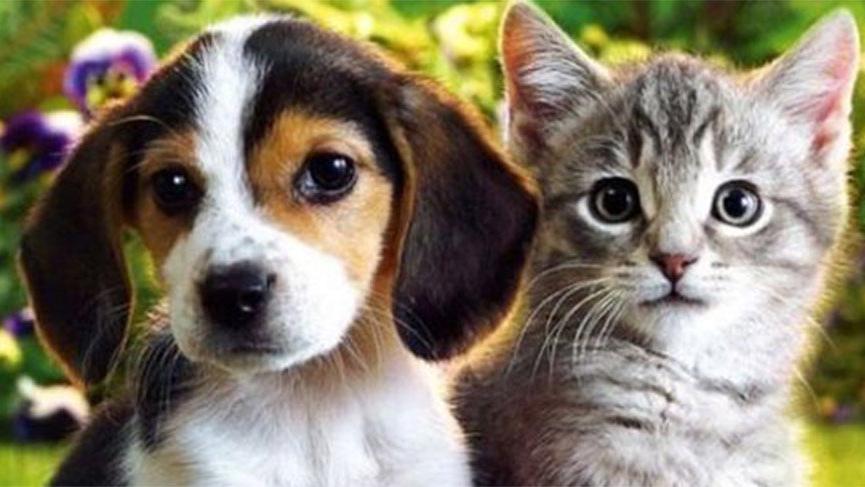 Bakan Pakdemirli: Petshop'larda artık kedi ve köpek satılmayacak