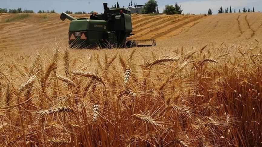 Buğday ithalatında tarihi rekor
