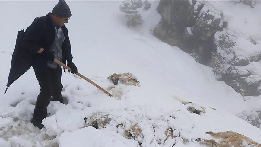 Konya'da 7 köpek ayakları bağlı halde ölü bulundu!