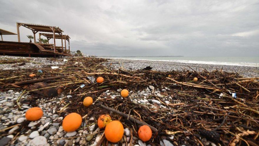 Hortum ve fırtına, meyveleri sahile sürüklemiş