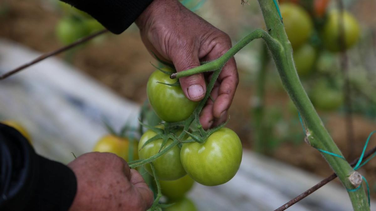 Meyve-sebzede üretim maliyetleri de artıyor