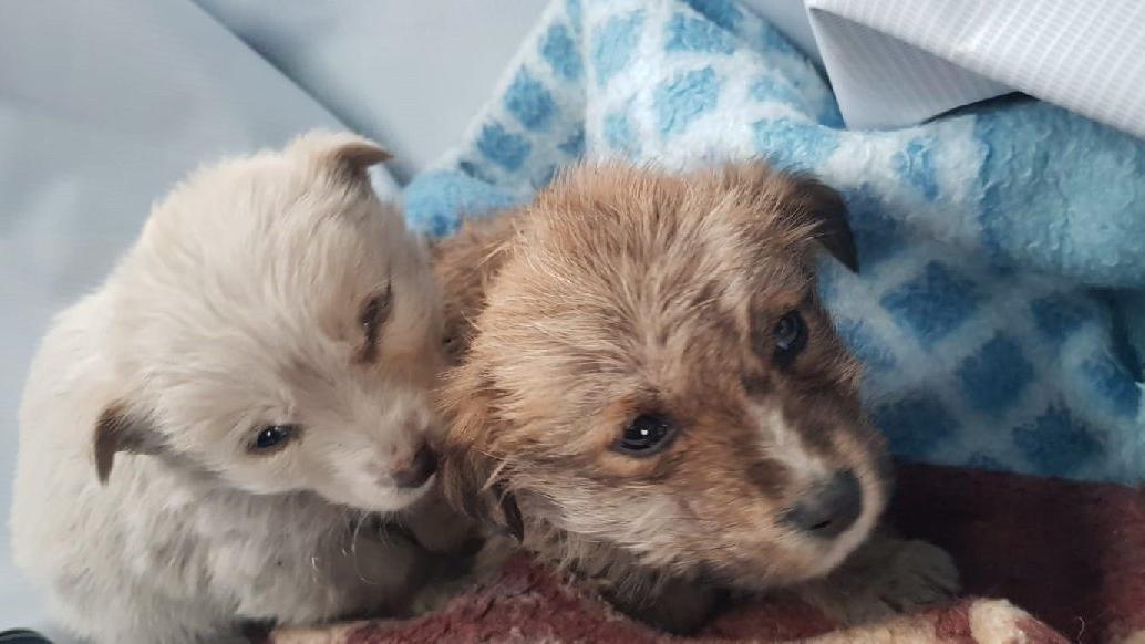Ormanlık alana terk edilmiş 12 köpek donmak üzereyken bulundu