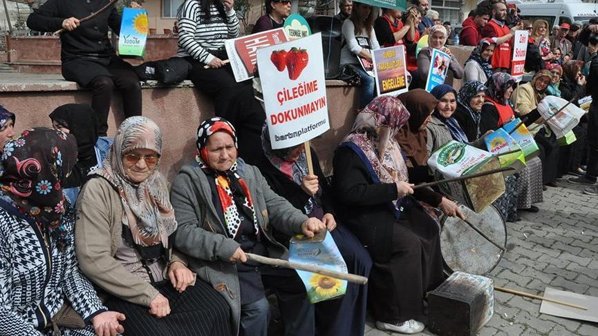 Danıştay, Amasra'daki termik santral için 'ÇED olumlu' raporunu bozdu