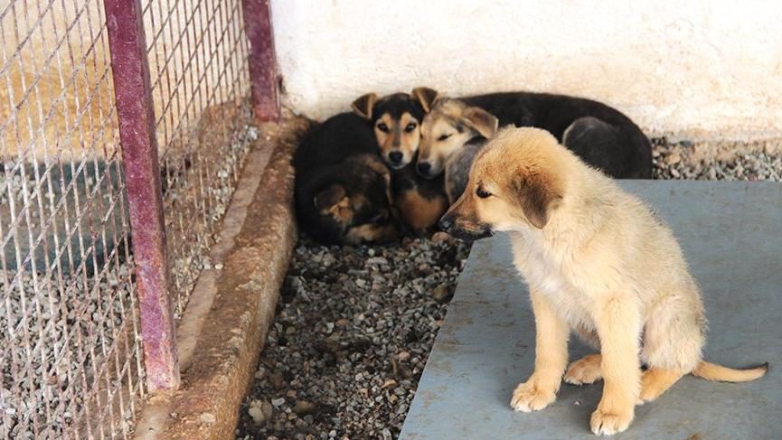 Hayvansever kadın barınağı basarak köpekleri serbest bıraktı