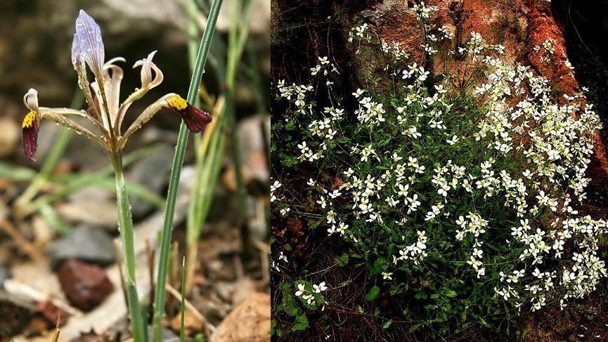 Antalya'daki mermer ocağına tepki: 23 bitki türü yok olacak