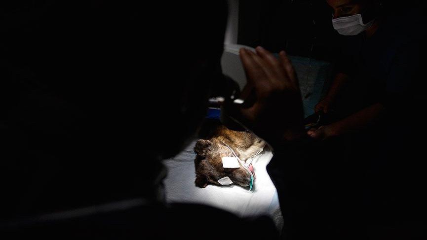 Köpeğe katarakt ameliyatı yapıldı