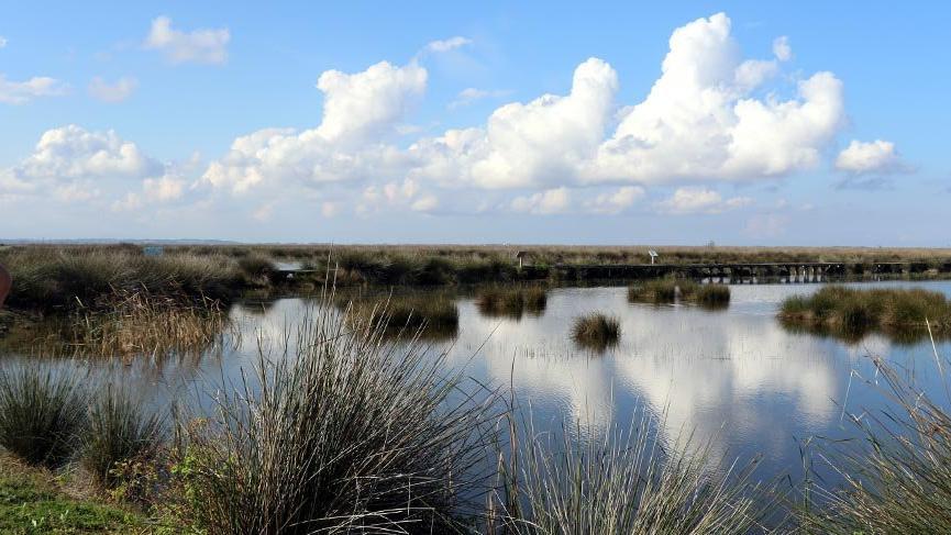 356 kuş türünün yaşadığı Kızılırmak Deltası için UNESCO sürecinde sona gelindi