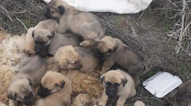 Bu nasıl vicdansızlık 9 yavruyu ölüme terk etti