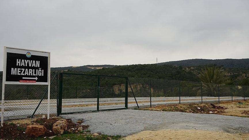 Mersin'de belediyeden hayvanseverleri sevindirecek karar
