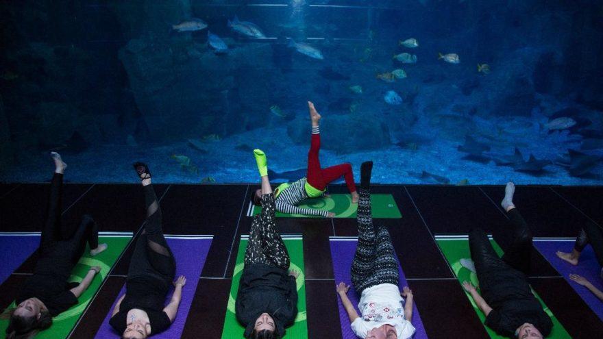 Balıklar eşliğinde yoga yaptılar
