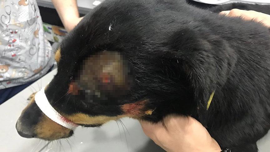 İstanbul Ataşehir'de korkunç olay! Köpeği başından vurdu