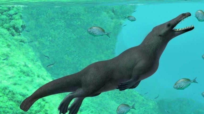 Peru'da 43 milyon yıllık 4 bacaklı balina fosili bulundu