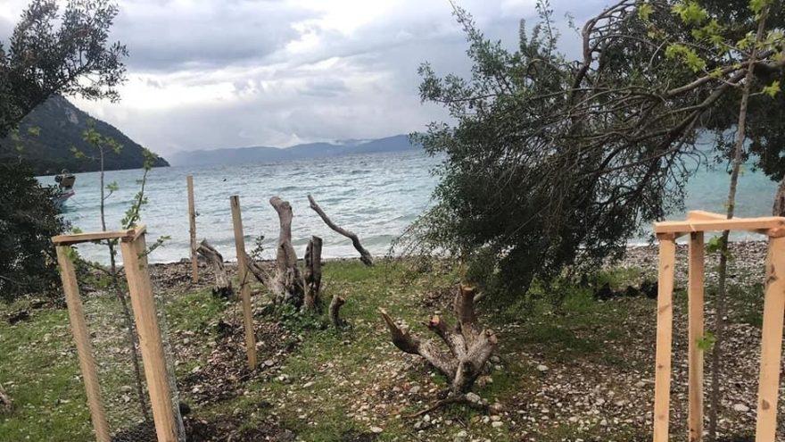 Muğla'da ağaç kesenler tutuklandı, oraya 100 ağaç dikildi