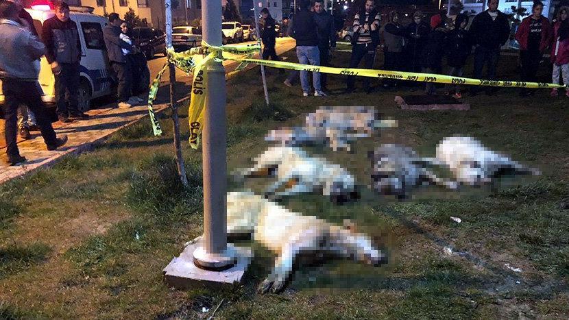 Ankara'daki köpek katliamıyla ilgili 3 kişi yakalandı!