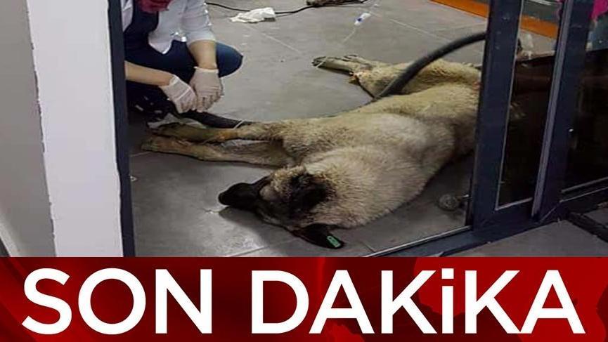 Ankara'daki köpek katilleri serbest bırakıldı