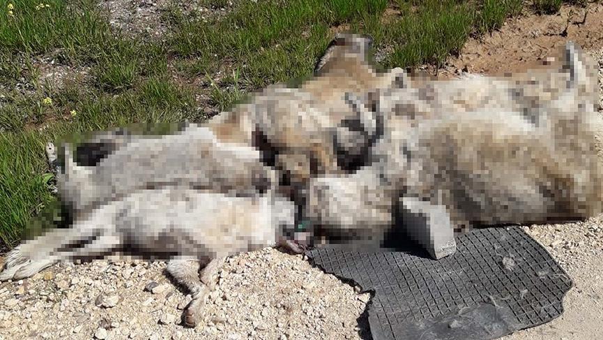 Diyarbakır'da 13 köpek ölü bulundu