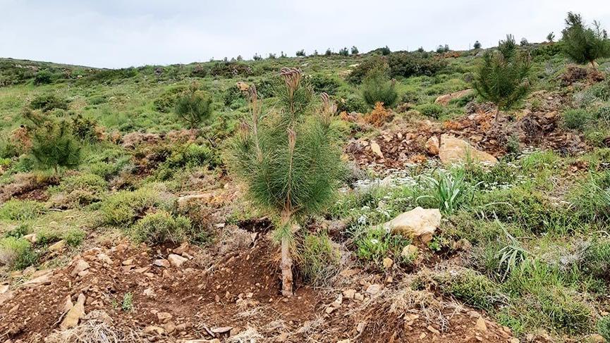 Ege'nin turizm cenneti Bozcaada 'yeşil ada' oluyor