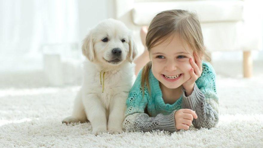Evcil hayvanların çocuklara katkıları nelerdir?